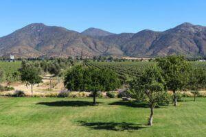 wines of chile | winemaven.io